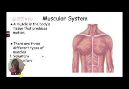 MS Science Body Systems Week of October 26 Kristen Rillieux TRT 29 14