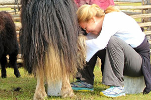 Garden Oaks Montessori teacher Shana Steinhardt milks a camel (or a yak) while on a trip to Mongolia this summer. The trip was underwritten by a grant from Fund for Teachers.